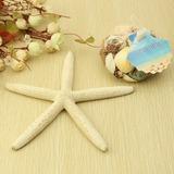 Étoile de mer et coquillage Accessoires décoratifs (131036935)