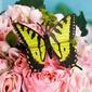 Schöne Kunststoff Schmetterling/Dekorative Accessoires (Satz von 6) (131037671)