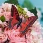 Bunte Kunststoff Schmetterling/Dekorative Accessoires (Satz von 6) (131037658)